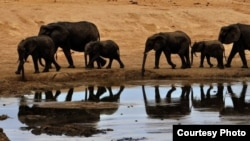 Elephants at a watering hole in Zimbabwe's Hwange National Park. Credit: African Wildlife Foundation