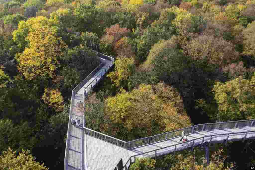 فصل پائیز در پارک ملی هاینیش در آلمان