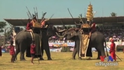 Thailand Urged To Curb Illegal Ivory Trade