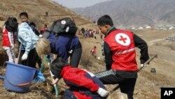 지난달 4일 북한 구장군 용천리에서 적십자 직원들이 식목 삭업을 벌이고 있다.