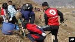 지난해 4월 북한 구장군 용천리에서 적십자 직원들이 식목 삭업을 벌이고 있다. (자료사진)