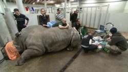 Warung VOA: Menyelamatkan Binatang Langka (2)