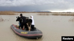 Men hold onto a rescued cow as they travel in a dinghy through floodwaters in the village of Darzez near Fier, Albania, Feb. 2, 2015.