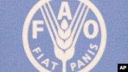 联合国粮农组织