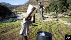 FILE - A man pours water he collected from a nearby river into a larger receptacle, in Fonds Verrettes, Haiti. New research suggests that farms surrounded by natural areas do better in times of drought.