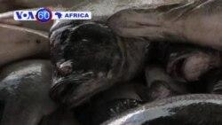 VOA 60 Afrika - Yuli 11, 2013; Rabuwar Kan Mutane a Masar
