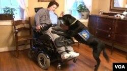 Caroline Elgin sufrió hace nueve años una parálisis cerebral y no puede caminar pero su perro Sajen le sirve de guía y protector.