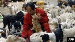 Защитники животных спасли 520 собак от китайских поваров