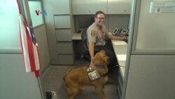 Anjing K9 Bantu Polisi Atasi Stres Pascatrauma - VOA untuk Buser SCTV