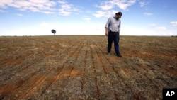 澳大利亚新南威尔士一名农民检查农作物状况