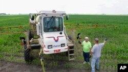 Thuốc diệt cỏ Roundup thường được dùng ở những cánh đồng trồng các loại hoa màu có gien được biến đổi.