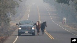 Pepe Tamaya leads horses Sammy, center, and Loli to safety from a deadly wildfire, Oct. 10, 2017, in Napa, California. The horses had been let out of their pasture Sunday, when the wind-whipped fire moved too fast for the horses to be loaded into trailers. When Tamaya return to his employers land, he found the house had been destroyed, but the horses were grazing on the front lawn.