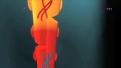 Yeni ixtira - Onurğa implantı