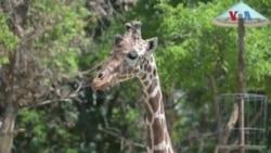 Нови атракции во Скопската зоолошка градина