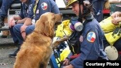 A photo of golden retriever Bretagne and her handler, Denise Corliss. (Barkpost.com)