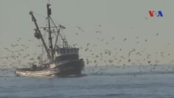 Ngành thủy sản Nam California bị ảnh hưởng nặng vì nước ấm bất thường