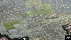 ภาวะอากาศ La Nina ก่อให้เกิดความวิตกกังวลเกี่ยวกับการเก็บเกี่ยวพืชผลในอินโดนีเซีย