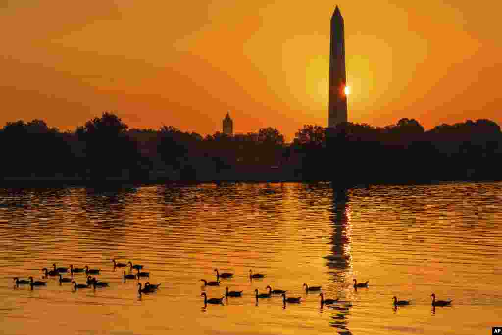 The sun peaks around the Washington Monument as geese float down the Potomac River at daybreak in Washington on what is expected to be another hot day in the Nation's Capital.