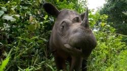 ေတာ႐ိုင္းတိရစၦာန္ ေမွာင္ခိုမႈ ဟန္႔တားဖို႔ အေ႐ွ႕ေတာင္အာရွကို WWF တိုက္တြန္း