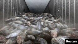輸往南韓的日本魚類產品(資料圖片)