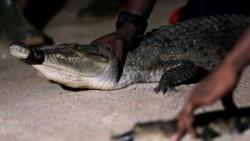 Aumentam ataques de crocodilos em Moçambique