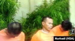 Tiga tersangka dalam kasus 1083 pohon ganja ditahan kepolisian Yogyakarta. (Foto:VOA/Nurhadi)