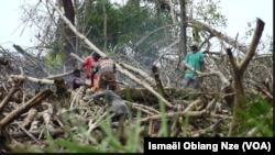 Des mangroves dans la zone du Cap Esterias au nord de Libreville, Gabon, le 20 novembre 2020.