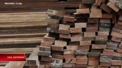 Mỹ công bố chi tiết điều tra VN buôn gỗ lậu, thao túng tiền tệ