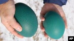 Kulit telur burung emu adalah salah satu jenis yang digunakan oleh pengukir Tina Kannapel (foto: Dok.).