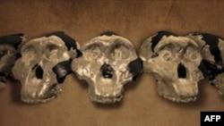 Informacione të reja mbi origjinën e njeriut në një ekspozitë të re në Washington