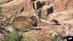 Sonoradagi muzeyda hayvonlarning 300 dan ziyod va o'simliklarning 1200 dan ko'proq turini ko'rish mumkin