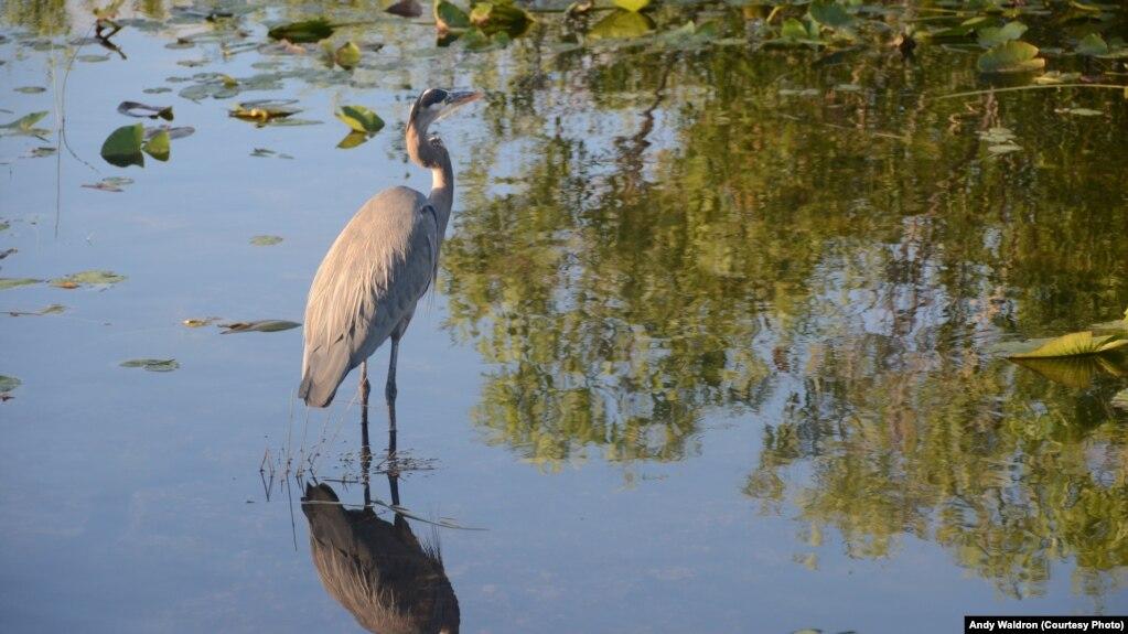 Pamje dhe gjallesa interesante në Parkun Everglades
