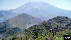 圣海伦斯火山区草木复苏