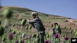 د افغانستان ولسي جرګې، د افغانستان او ازبکستان ترمنځ د مخدره موادو د قاچاقبرانو پر ضد د مبارزې هوکړه لیک تصویب کړ.