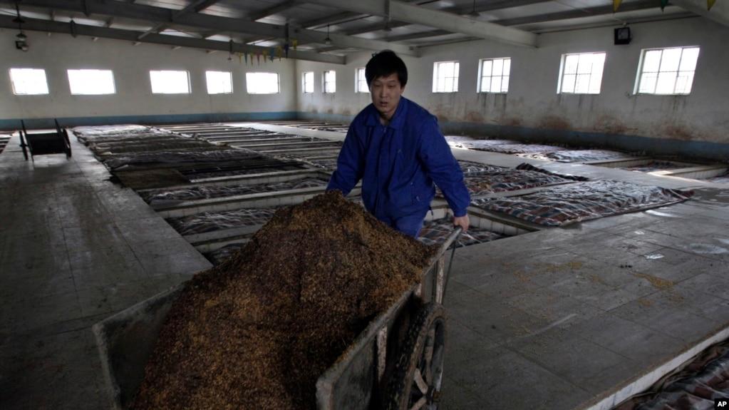 一名中國工人在北京以北的一家二鍋頭酒廠推著一車高粱。 (2008年1月27日)