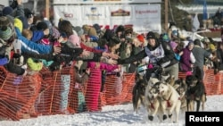 FILE - Dallas Seavey, winner of the 2012 Iditarod, charges down the trail during the re-start of the Iditarod dog sled race in Willow, Alaska, Mar. 3, 2013.