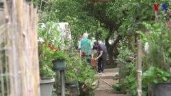 Los beneficios de los huertos urbanos