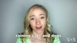 OMG!美语 Raining Cats And Dogs!