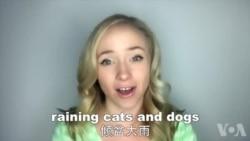 OMG!美语 Raining Cats And Dogs!