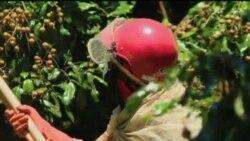 泰国农产品安全令人担忧