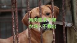 韩国狗肉农场因需求减少而关闭 获美国机构补偿