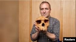 The Natural History Museum's Professor Chris Stringer is seen holding the Broken Hill skull, Homo heidelbergensis, a fossil of an extinct human species found in Zambia in 1921 in this undated image provided to Reuters March 31, 2020. (Kevin Webb/NHM Image