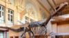 Dinosaur Skeleton of Possible New Species Sells for $2.3 Million