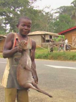 Boy holds an antelope in Bertuoua, southeastern Cameroon