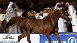 باستان شناسان: ٩۰۰۰ سال پيش در عربستان اسب ها برای نخستين بار در جهان اهلی شدند