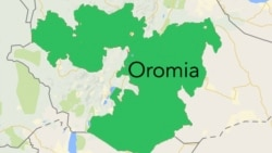 Ummatii aanaa Leeqaa Dullachaa fi Aanaa Halluu hirira bahee rakkoo himate Oromoo baqattellee horii guure