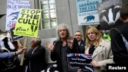 Brian May (C), guitarist of the legendary rock band Queen, leads a protest against the cull of badgers, in central London June 1, 2013.