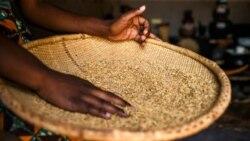 La cherté du pain pousse les Zimbabwéens vers des alternatives