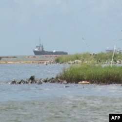 Meksika Körfezi'ni Petrol Yiyen Mikroplar Temizliyor