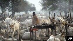 کمبود مواد غذایی در سودان جنوبی